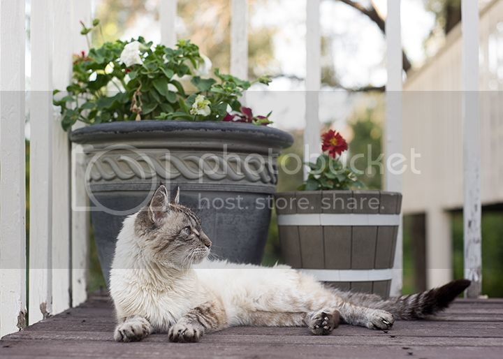 dc maryland virginia pet photographer portrait
